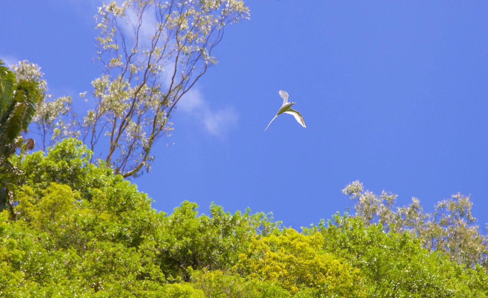 indian-ocean-flora-and-fauna